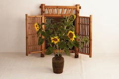 Five sunflowers in a clay vase. On the background of a mirror in home village studio stock image