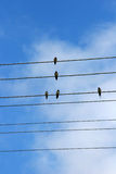 Five swallows Royalty Free Stock Photos