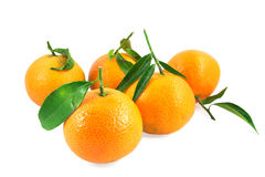 Five tangerines with leaves Royalty Free Stock Images