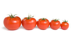 Five tomatoes-1 Royalty Free Stock Image
