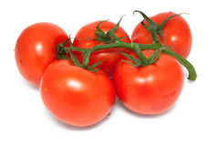 Five tomatoes on branch Royalty Free Stock Images