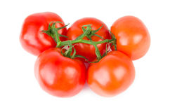 Five tomatoes on branch Royalty Free Stock Photography