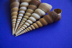 Five Tower screw shells Stock Image