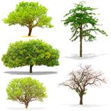 Five trees isolated on white background Royalty Free Stock Images