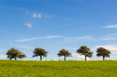 Five trees on a row Stock Image
