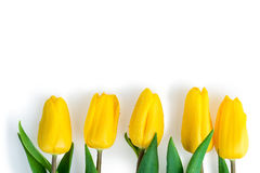 Five tulips covered with water drops lie in a row Royalty Free Stock Photos