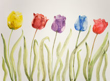 Five tulips. Of different color stock illustration