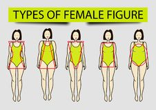 Five types of female figures,  image Royalty Free Stock Image