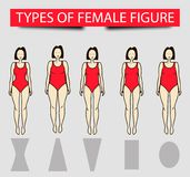 Five types of female figures, vector image Stock Images
