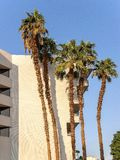 Five palms near hotels wall. Five very high palm-trees near hotels wall with balconies in a shade one warm sunny morning on sea resort stock photo