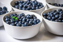 Five white ceramic bowls with blueberries. Front view of five white ceramic bowls full of blueberries with some green leaves in one of the bowls Royalty Free Stock Photo