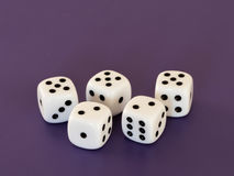 Five white dices lying on a table stock photo
