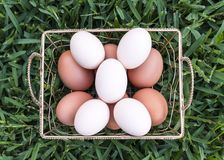Five White Eggs Royalty Free Stock Photography