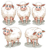 Five white sheeps Royalty Free Stock Images