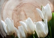 Five white tulips lie on a large transverse wooden saw cut. Natural background. Five white tulips lie on a large transverse wooden saw cut Royalty Free Stock Image