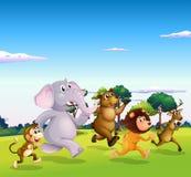 Five wild animals running Stock Photos