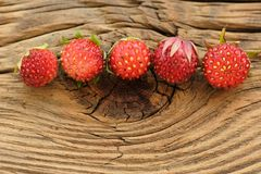 Five wild strawberries Fragaria viridis in row on wooden backgro. Und closeup macro Stock Photo