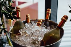 Five wine bottles chill in ice bucket Royalty Free Stock Photo