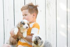Little boy and corgi puppies royalty free stock photos