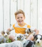Little boy and corgi puppies stock photos