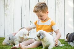 Little boy and corgi puppies stock photography