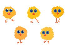Five yellow little chicks with big blue eyes stock photos