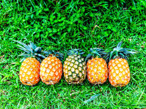 Fives ripe pineapple  on grass Royalty Free Stock Photography
