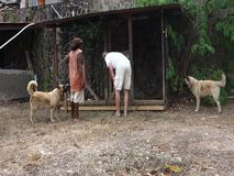 Fixing a dog pen in the caribbean Stock Image