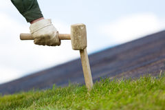 Fixing rolled sod grass turf on soil with wood stick Stock Image