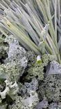 Fixins de salade photographie stock libre de droits