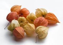 Fizalis extraños de la fruta Imagenes de archivo