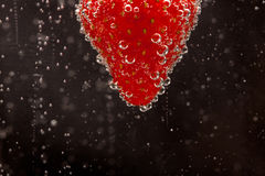 Fizzing Strawberry. A fresh strawberry fizzing in sparkling water Stock Image