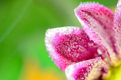 Fizzy Flower in water Royalty Free Stock Images