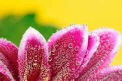 Fizzy Flower in water Stock Photos
