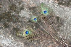 Fjäderöga för tre påfågel Fotografering för Bildbyråer
