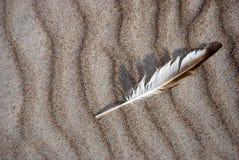 fjäder Fotografering för Bildbyråer