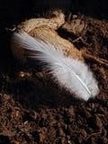 Fjäder arkivbilder