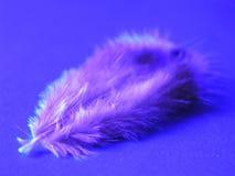 1 fjäder Arkivfoto
