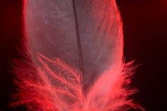 Fjäder Royaltyfri Fotografi