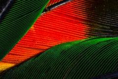Fjäder Arkivbild