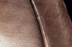 fjäder Royaltyfri Foto