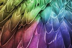 Fjäder Färgrika fågelfjädrar Arkivfoton