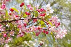 fjäder för 03 blomning Arkivbilder