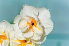 fjäder för 3 blommor Arkivbild