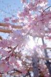 fjäder för blomma för dof för azaleablomningclose grund upp Royaltyfri Fotografi