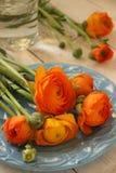 fjäder för blomma för dof för azaleablomningclose grund upp Arkivbilder