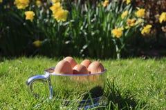 fjäder för liggande för koppeaster ägg Royaltyfria Bilder