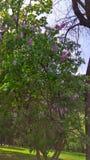 fjäder för park för barnkammare för blommaholland keukenhof royaltyfria foton