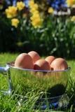 fjäder för stående för koppeaster ägg Arkivfoto