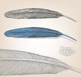 Fjäder i gravyrstil Arkivbild